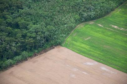 Expansão agrícola na Bolívia. Foto de Sam Beebe/Flickr