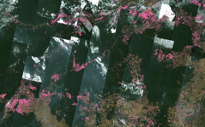 Novo sistema permite monitorar mudanças na cobertura florestal do Brasil semanalmente, a partir de imagens geradas por satélite
