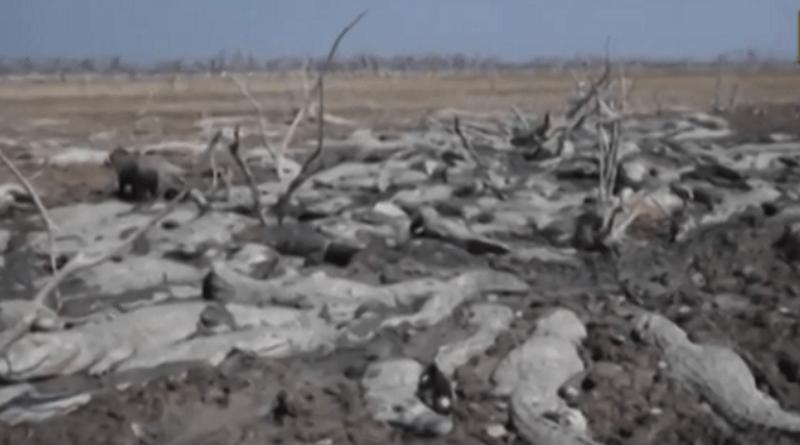 Se não agirmos o quanto antes para conter o aquecimento global ao mínimo possível, cenas como as do rio Pilcomayo poderão se tornar mais frequentes nas próximas décadas (imagem: Reprodução Youtube/ABC TV)