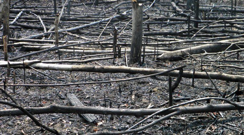 Avanço das fronteiras agropecuárias e aumento da temperatura média alimentam incidência de queimadas na Amazônia, ameaçando a maior floresta tropical do planeta (crédito: Luis Alveart/Flickr - CC BY-NC-ND 2.0)