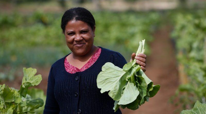 Curitiba se destacou na premiação da C40 pelas iniciativas de agricultura urbana (crédito: Rodolfo Buhrer/AP/C40)