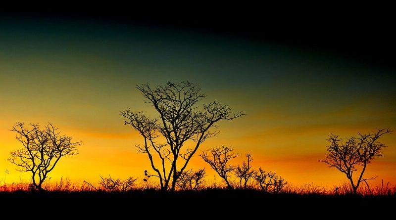 Em 15 anos, o país perdeu 1/5 de sua área de manguezais, em grande parte por conta da expansão urbana; o Pantanal também sofreu redução substancial no período, perdendo 13% de sua extensão (crédito: Juliana Bianchi/Wikimedia - CC SA 3.0)