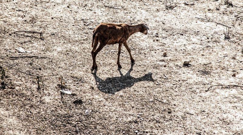 Desde 2012, o Nordeste passa por uma de suas piores secas registradas até hoje; intensidade e frequência de eventos climáticos extremos poderão aumentar nas próximas décadas, em decorrência da mudança no clima global (crédito: Flávio Costa/Flickr - CC NY-NC 2.0)