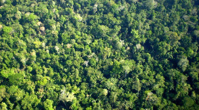 A Aliança REDD+ Brasil esclarece alguns mitos e verdades sobre esta ferramenta para combate ao desmatamento e proteção das florestas (crédito: Margarete Brandão/Wikimedia - Domínio Público)