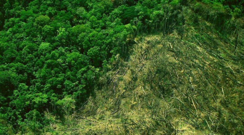Para retomar a trajetória de redução do desmatamento, o Brasil precisa caminhar para estágios mais avançados de REDD+, com foco especial em pagamento baseado em resultados, destaca novo estudo (crédito: Ana_Cotta/Flickr - CC BY 2.0)