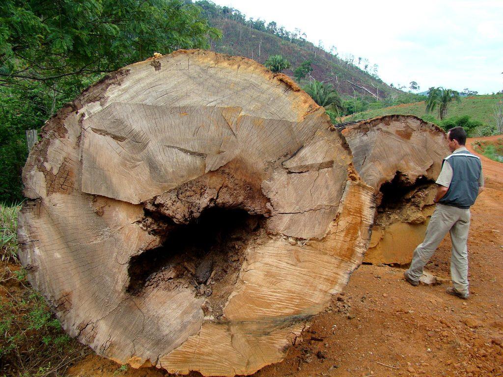 """O desmatamento na Amazônia voltou a ser um """"calcanhar de Aquiles"""" para o governo brasileiro, com aumento expressivo no ritmo de destruição da floresta nos últimos anos (crédito: Ana_Cotta/Flickr/CC BY 2.0)"""