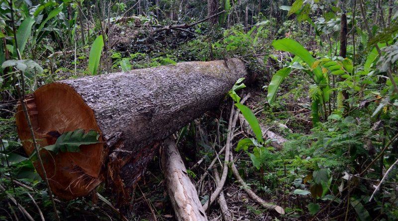 Avanço do desmatamento na Amazônia e no Cerrado puxaram as emissões de gases de efeito estufa do Brasil para cima em 2016, apontam estimativas do SEEG/Observatório do Clima (crédito: Vinícius Mendonça/Ascom/Ibama - CC BY-SA 2.0)