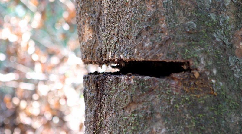 Estudo aponta que ações de combate ao desmatamento precisam ir além da destruição ilegal da floresta amazônica - o corte legal de mata também precisa ser zerado para que o Brasil possa efetivamente contribuir para reduzir o potencial de aquecimento do planeta (crédito: Felipe Werneck/Ascom Ibama/Flickr - CC BY-SA 2.0)