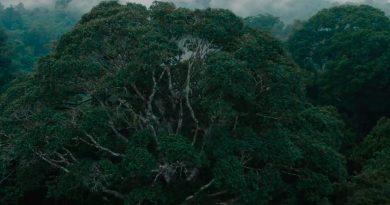 Celulares contra o desmatamento