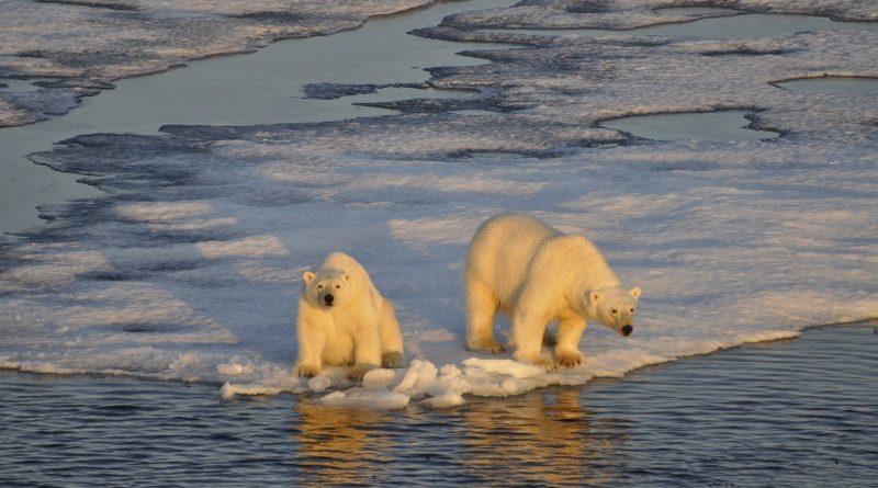 Pesquisadores examinaram o impacto da mudança do clima em quase 80 mil espécies da fauna e flora em 35 regiões com grande diversidade biológica em todo o mundo