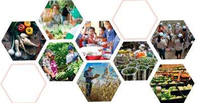 Chamada de Casos: Agricultura familiar e a cadeia de alimentos