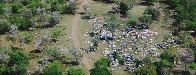A pecuária ocupa o primeiro lugar em número de pessoas resgatadas do trabalho análogo ao escravo no Brasil. Foto: Food Empowerment Project