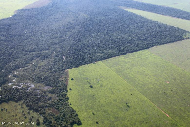 Compradores internacionais, ONGs, pesquisadores/as e governos têm se preocupado com o vínculo direto ou indireto da soja e da carne bovina com o desmatamento (algumas referências incluem: A, B, C, D, E). Foto: Mongabay