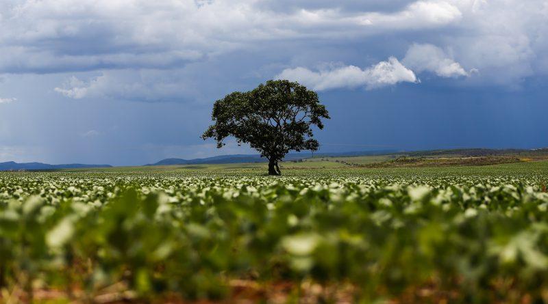 Marcelo Camargo/Agência Brasil  – Plantação de soja em área de Alto Paraíso (GO)