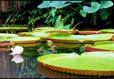 A (falta de) cultura filantrópica na Amazônia