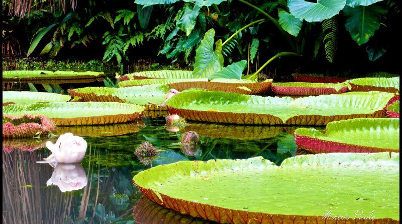 Marcus Paulo/Flickr Creative Commons – Parque Zoobotânico do Museu Paraense Emílio Goeldi