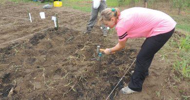 Estudo sobre solos tropicais rende prêmio da Royal Society a pesquisadora no Brasil